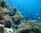 Keindahan bawah laut di perairan Pulau Liran yang sempat diabadikan oleh Tim Laut