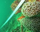 Penelitian di perairan sekitar Pulau Warhu oleh Tim B