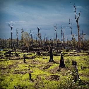 sisa  kebakaran hutan pada  tahun 1996 hingga saat ini masih belum dilakukan rebaoisasi kembali.