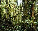 Lowland forest in HoB, Heart of Borneo, 2014