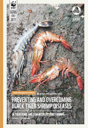 BMP - Preventing and Overcoming Black Tiger Shrimp Diseases | WWF