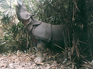 / ©: WWF-Indonesia & Balai Taman Nasional Ujung Kulon