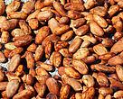 Biji Cacao Kerafat