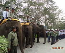 Deretan gajah Flying Squad berbaris rapi
