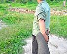 Tesso Nilo merupkan hutan dataran rendah yang tersisa di Riau. Di dalamnya hidup sekitar 150 ekoar gajah Sumatera, hampir setengah dari populasi gajah Sumatera di Riau berada di kawasan ini
