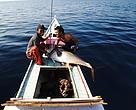 Tangkapan tuna yelow fin dengan cara ramah lingkungan