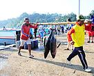Tuna hasil tangkapan yang dibawa ke tempat pelelangan ikan Sendang Biru