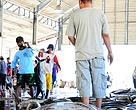 Tuna yang akan dilelang di Tempat Pelelangan Ikan (TPI) di Sendang Biru, Malang