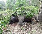 A juvenile elephant was found dead inside TNNP on 11 October 2012