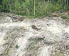 Illegal Logging activities inside Tesso Nilo National Park, Sumatra