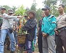 Pencabutan tanaman sawit untuk direstorasi di SM. Rimbang Baling