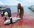 Penangkapan ikan tuna sirip kuning adalah salah satu aktivitas perikanan penting di wilayah Alor Solor