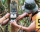 Anggota Tim Survei Harimau melakukan instalasi kamera jebak di hutan alam Jambi, Indonesia