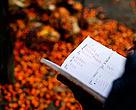 Ilustrasi: Petani sawit mencatat jumlah hasil panen