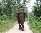 Junjung (mahout) dan Rahman, salah satu gajah jantan Flying Squad