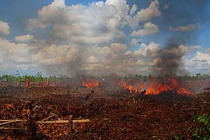 / ©: WWF-Indonesia/Tira Maya