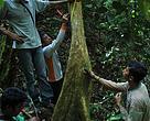 Monitoring Sarang Orangutan di Bukit Peninjau