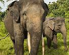 Yongki,  gajah berusia 34 tahun seberat 3,3 ton itu ditemukan mati tanpa gading.