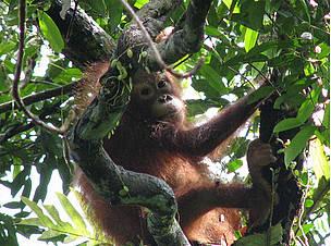 © WWF-Indonesia/Yuli