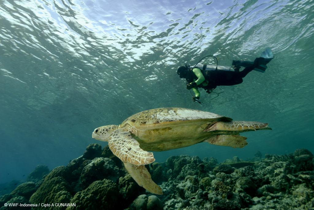 Berau Indonesia  City new picture : Berau dan KKP sepakat kelola potensi laut bersama | WWF Indonesia