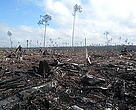 Cleared peatland areas by APP in Riau