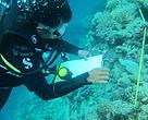 Praktek pengamatan karang