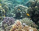 National Park Cendrawasih-Papua