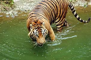 / ©: WWF-Indonesia/Saipul Siagian