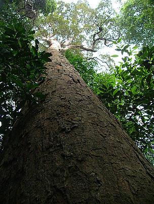 © WWF-Indonesia/Sunarto